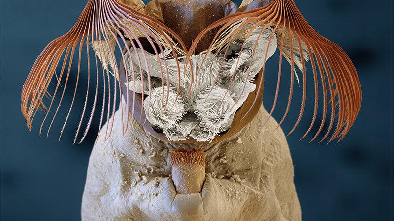 ©eye of science, Meckes & Ottawa GbR