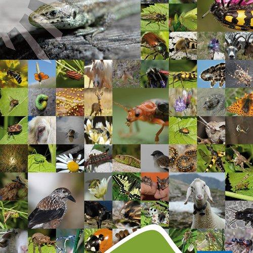 Imageplakat Tiere