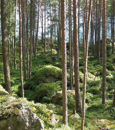 Bergsturzwald Winkelberg ©K. Amprosi - Naturpark Ötztal