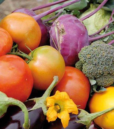 Eppas Gutes Gemüse © Bauernladen Längenfeld