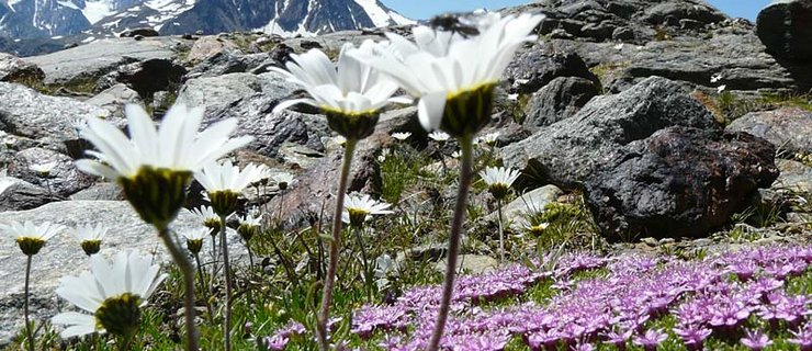 Gletscher, Geologie, Geschichte - Naturpark Ötztal