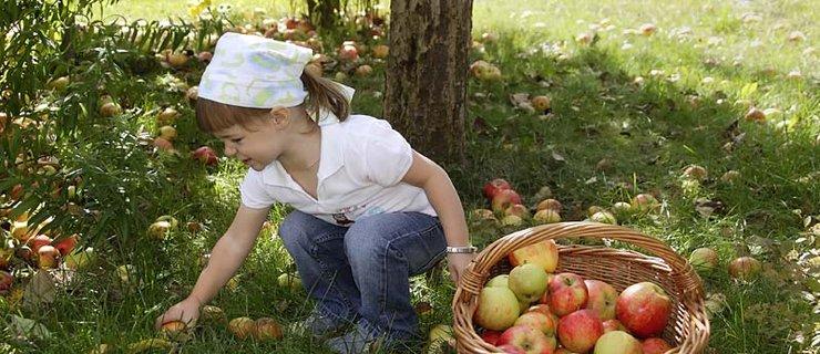 Fruchtgenuss zum Anbeissen © Ötztal Tourismus