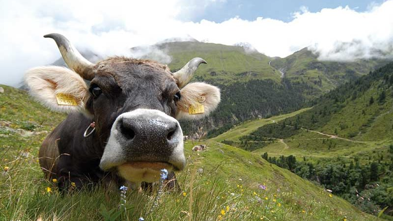Eppas Gutes Viehwirtschaft © NATURPARK ÖTZTAL