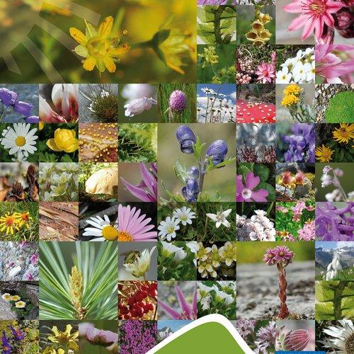 Imageplakat Pflanzen