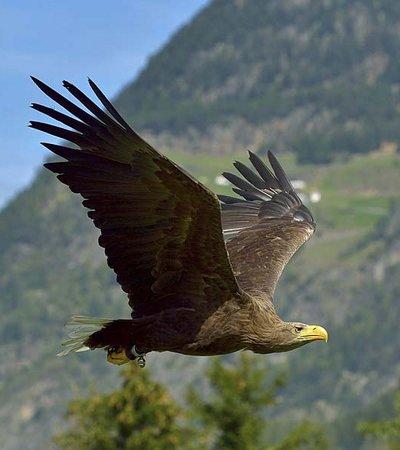 ©Ötztaler Greifvogelpark - Gebhard Schranz