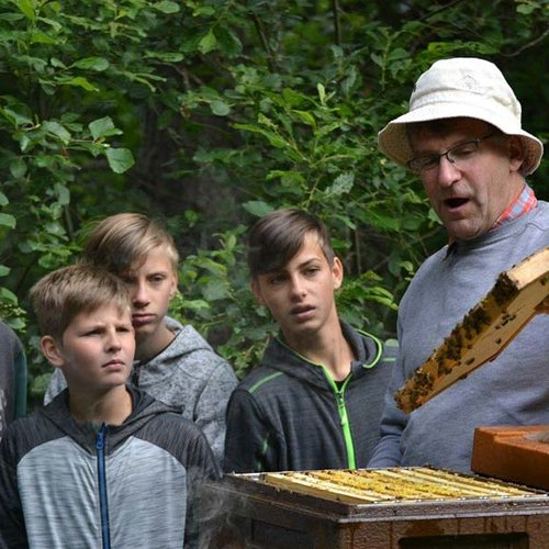 Bienen ©Archiv Naturpark Ötztal P. Pattner